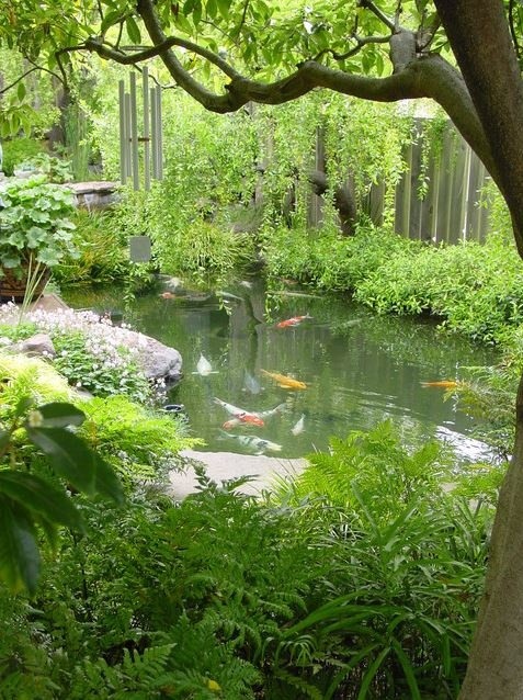 Natural looking koi pond my outdoor garden pinterest for Natural koi pond