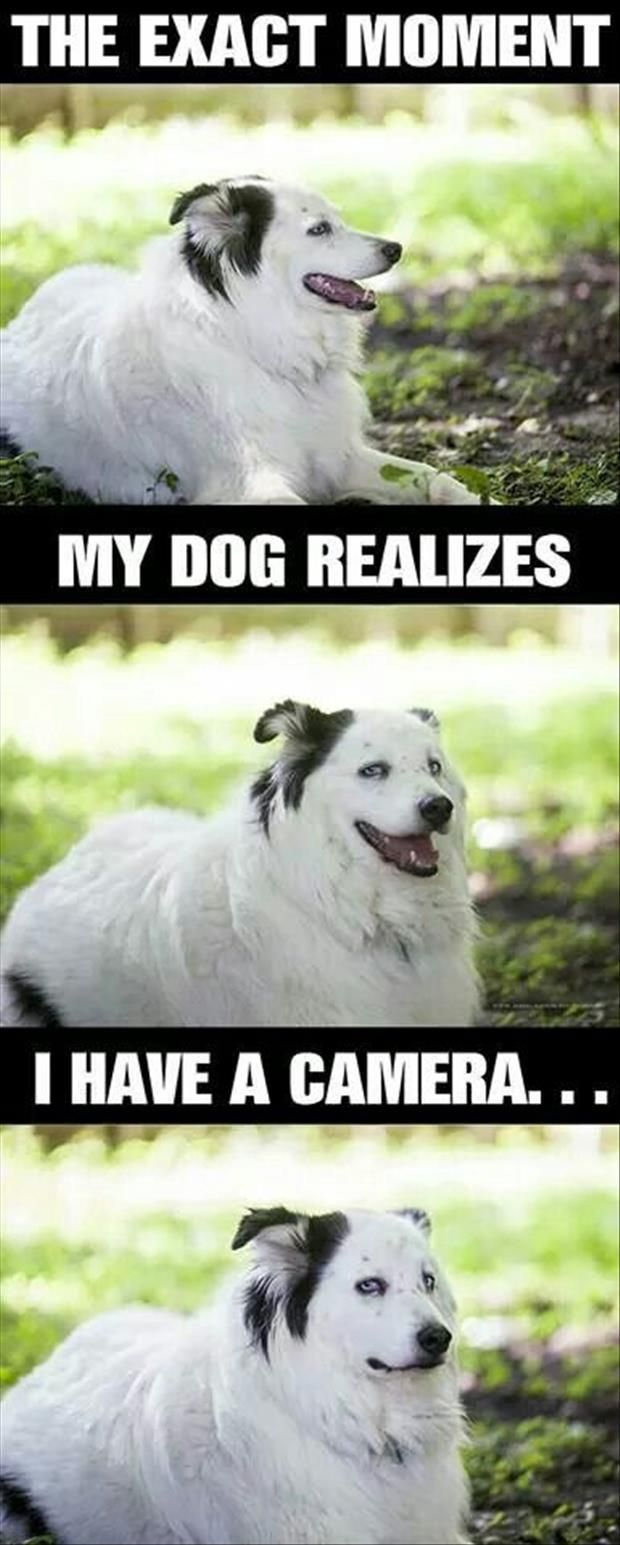 dog realizes camera, funny dog, photogenic dog
