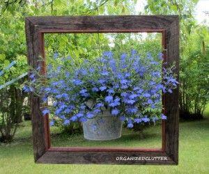 Lobelia in a hanging frame  Planta Lobelia erinus florida colgada enmarcada por un marco de madera rustico como decoracion del jardin