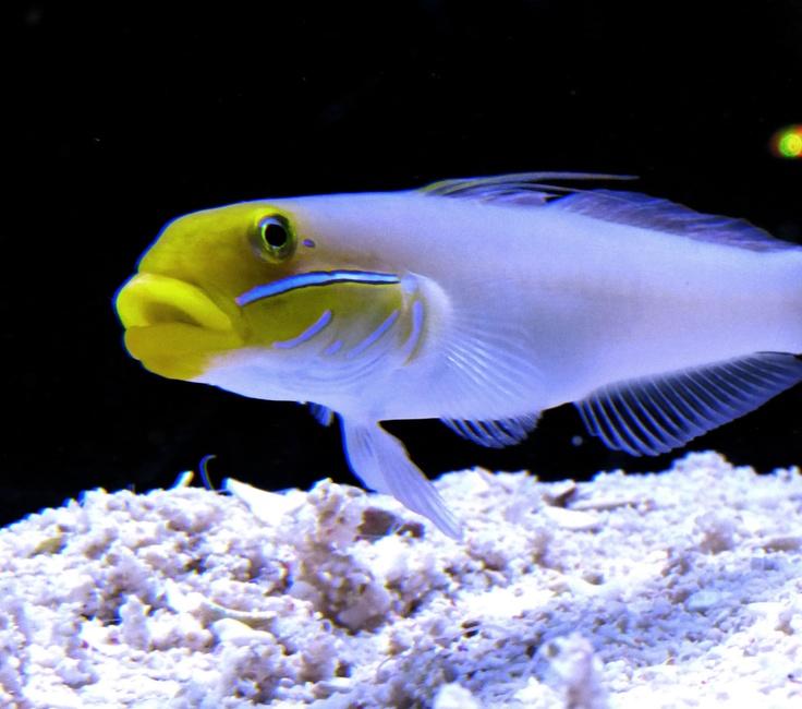Brightly Coloured Fish At Aquarium Under The Sea