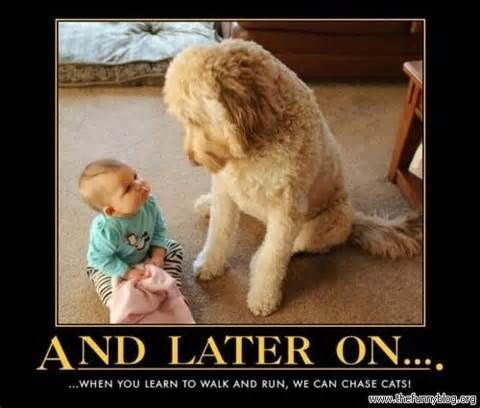 Funny Dogs Blog Collection Pictures And Memes Dog Cat Videos