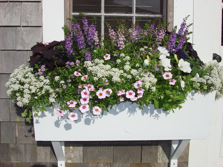 Flower box gardening ideas pinterest for Flower garden box ideas