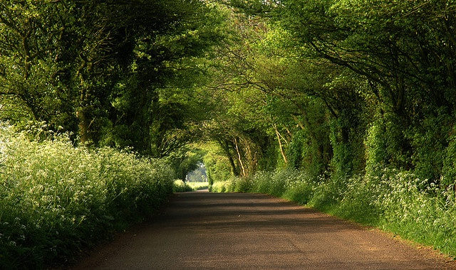 english lane by dave watts, flickr
