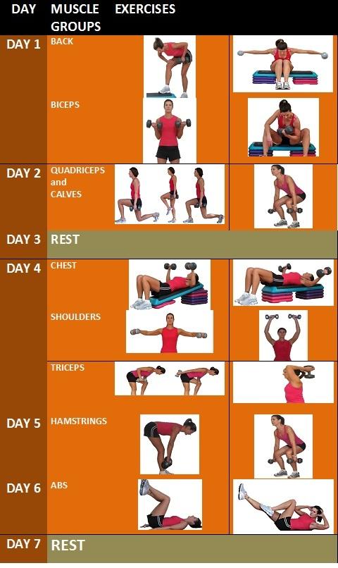 Weekly Weight Training Schedule | Workout | Pinterest