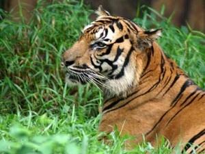 essays on animals in zoos