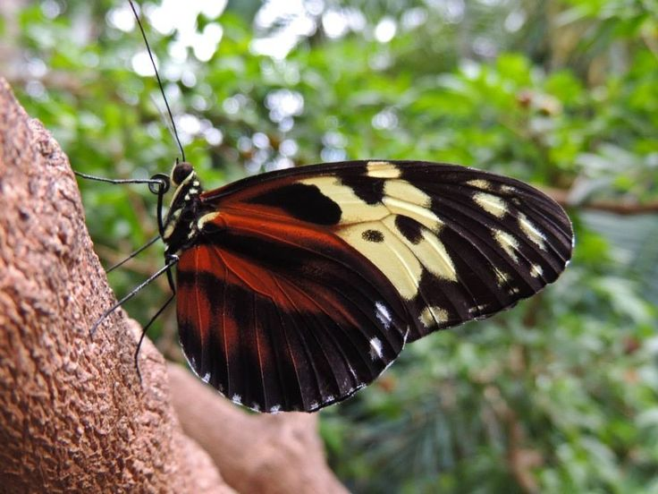 niagara falls butterfly conservatory my photography. Black Bedroom Furniture Sets. Home Design Ideas