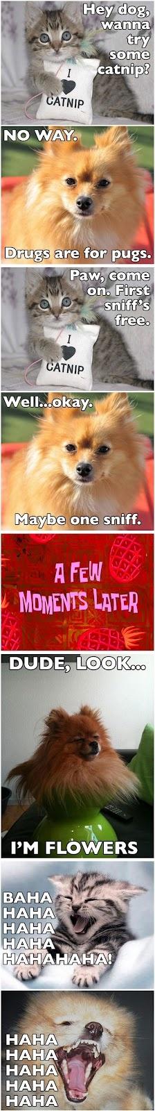 Dog Tries Catnip | Funny Memes