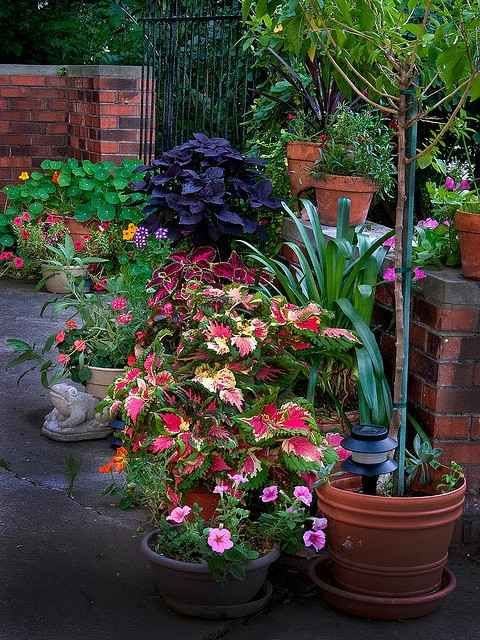 Outdoor container garden ideas for Container gardening ideas