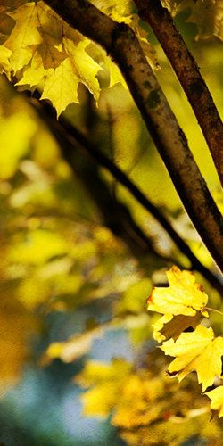 Autumn Beauty in Yellow - Nature Photography - Autumn/Fall Decor by LisaBonowiczPhotos
