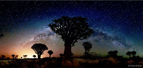 Namibian quiver trees and the glow of a galaxy