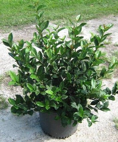 Best Bushes To Plant