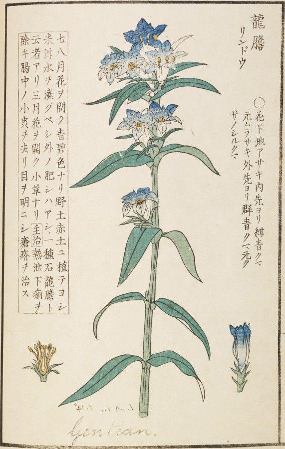 川原慶賀の画像 p1_33