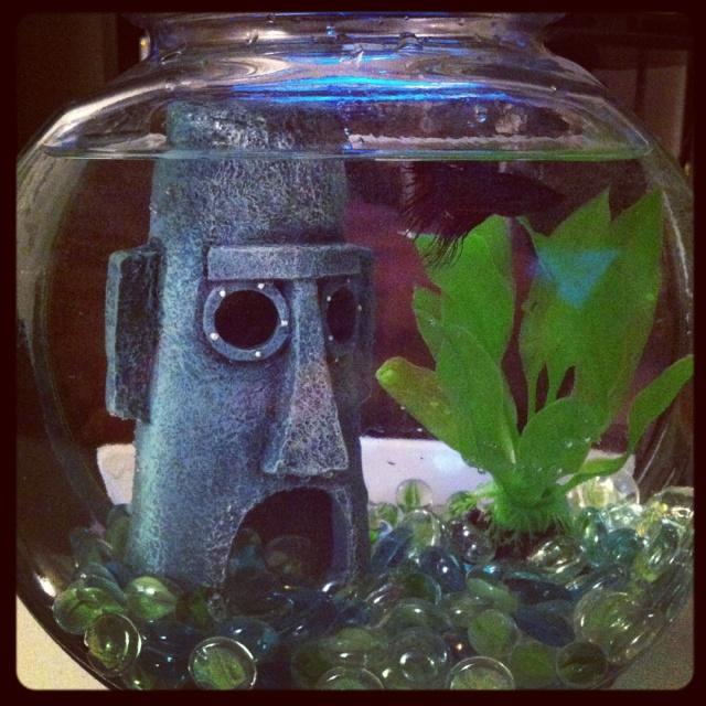 Best fish tanks ever best fish tank ever fish tank for Best fish for aquarium