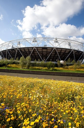 Fields of gold - the annual meadows are timed to be the star attraction when the Games get underway. Telegraph.co.uk