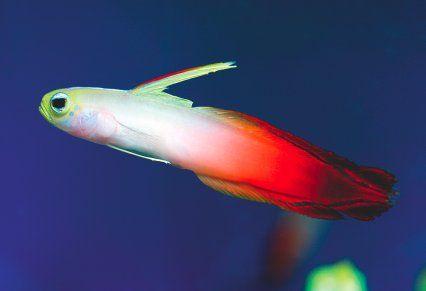 Dartfish Motion of the Ocean Pinterest