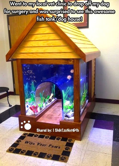 Fish tank doggie bed check this out pinterest for Fish tank bed