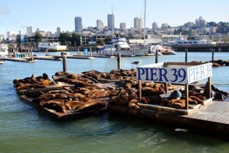 Pier 39 San Francisco Our World Pinterest