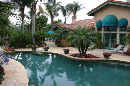 Pool Palm Trees 2013 Gardening Pinterest