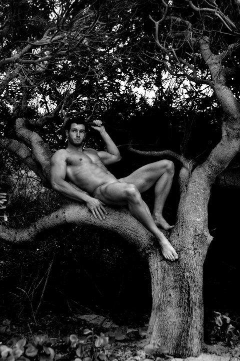 The Naked Tree 3