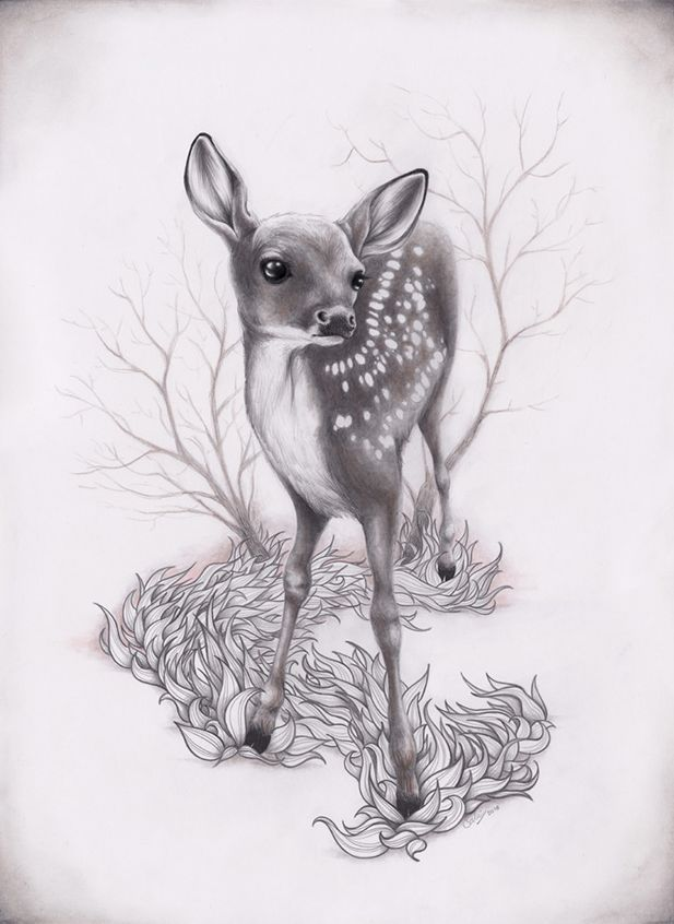 how to draw a realistic baby deer