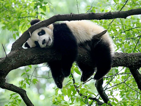 Lazy Panda | Reasons To Smile | Pinterest