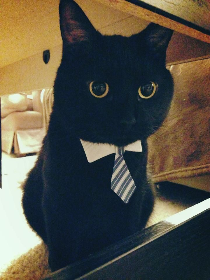 business cat Welcome to the cat financial account management system we have recently launched a new, mobile-friendly design, compatible with your phone and tablet.