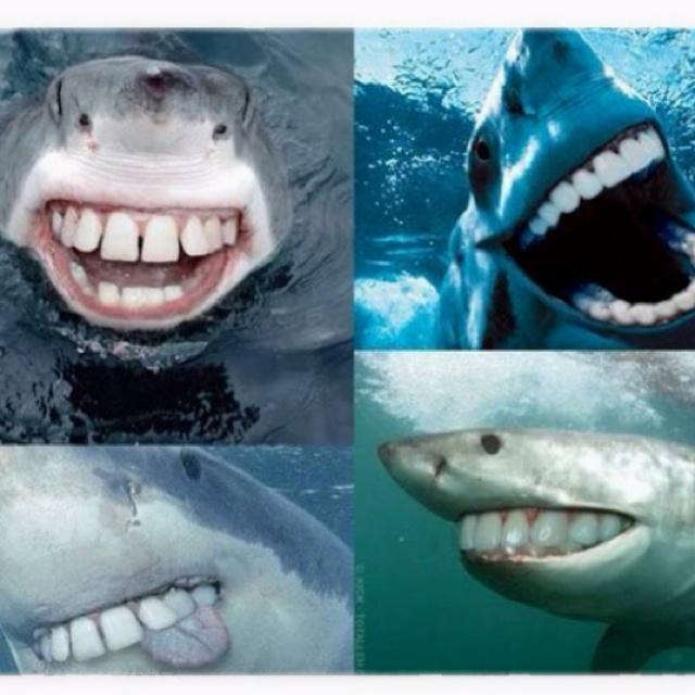 Sharks with people's teeth