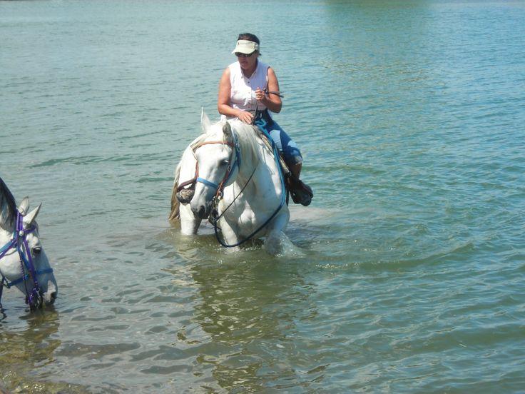 Horseback Rides In Montana Summer Fun