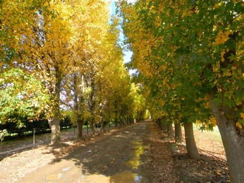 Citrusdal South Africa  City new picture : Autumn in Citrusdal, South Africa | Nature | Pinterest