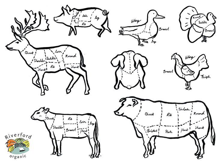 animal cut charts