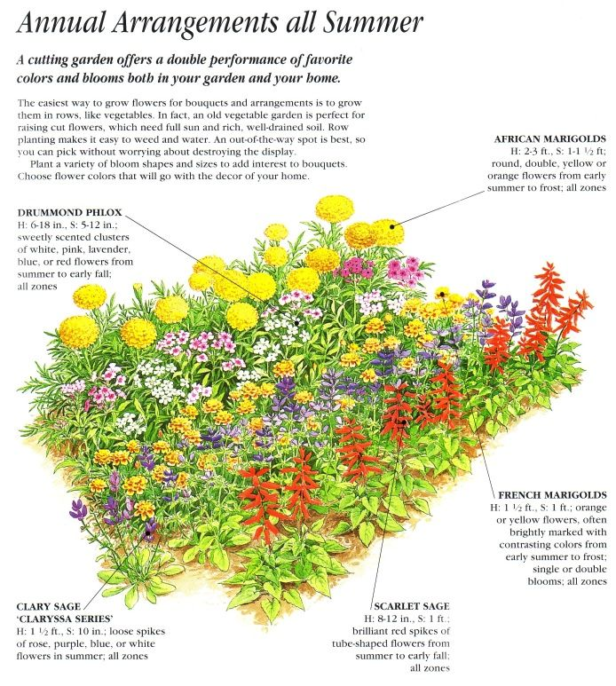 annual cut flower garden layout ideas for the garden