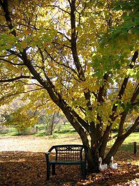bench under shade tree in backyard dream homes pinterest