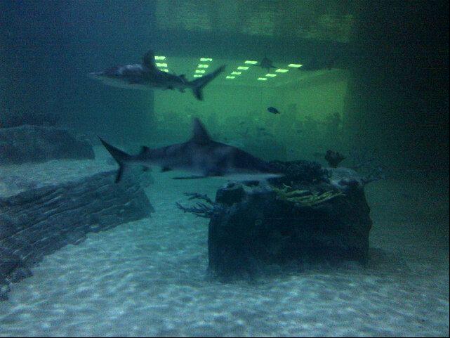Living Planet Aquarium In Draper Ut Places Ive Been