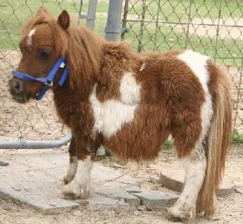 Quarter Horses For Sale In Texas With Photos horses | Things...
