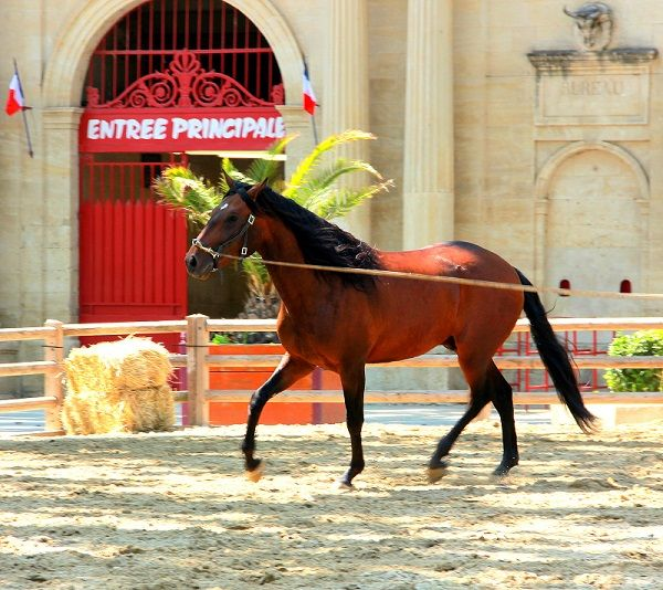 Rencontres equestres beaucaire