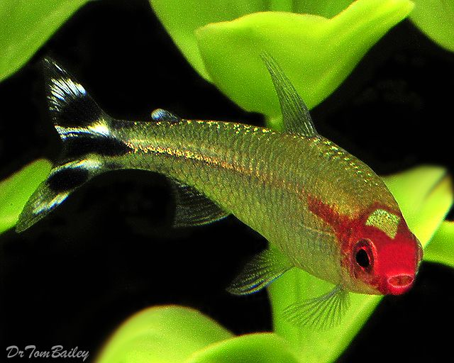 rummy nose tetra- I had these and loved them! Great schoolers