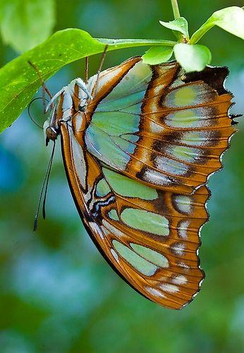 butterfly | ☆ Macro