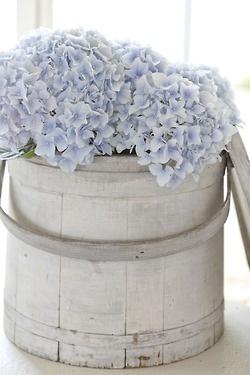 hydrangea in whitewashed bucket