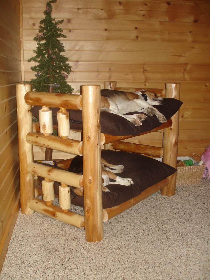 how to get a dog on a bunk bed