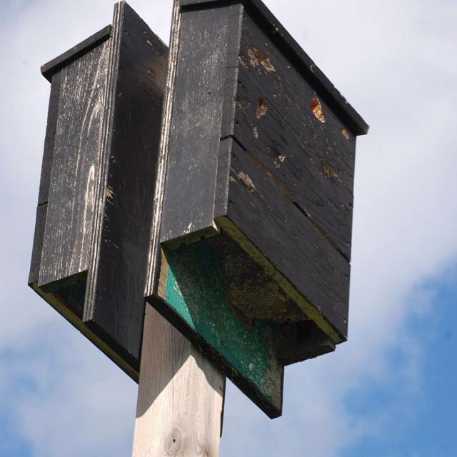 Bat house bat house pinterest for Bat condo