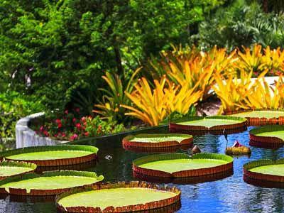 Naples Botanical Garden Naples Florida Places I D Like