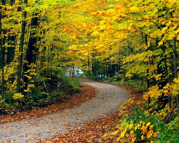 Road covered with Autumn
