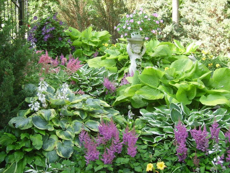 Hostas and Astilbes Garden Plans Haven in the Hollow