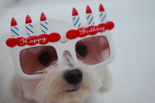 Happy Birthday dog. | P e t s : Dog's Birthday Party | Pinterest