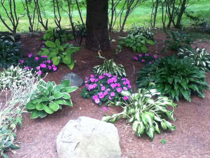 Garden Ideas Under Pine Trees : New here landscaping under pine trees