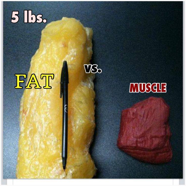 Fat vs. Muscle | WEIGHT LOSS | Pinterest