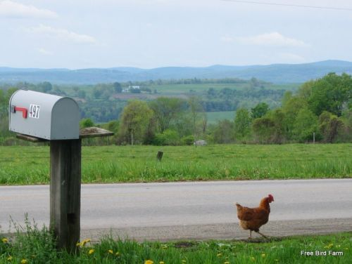 Upstate New York | In the Country | Pinterest