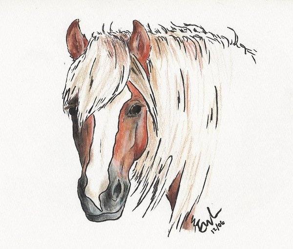 Haflinger Artist Page