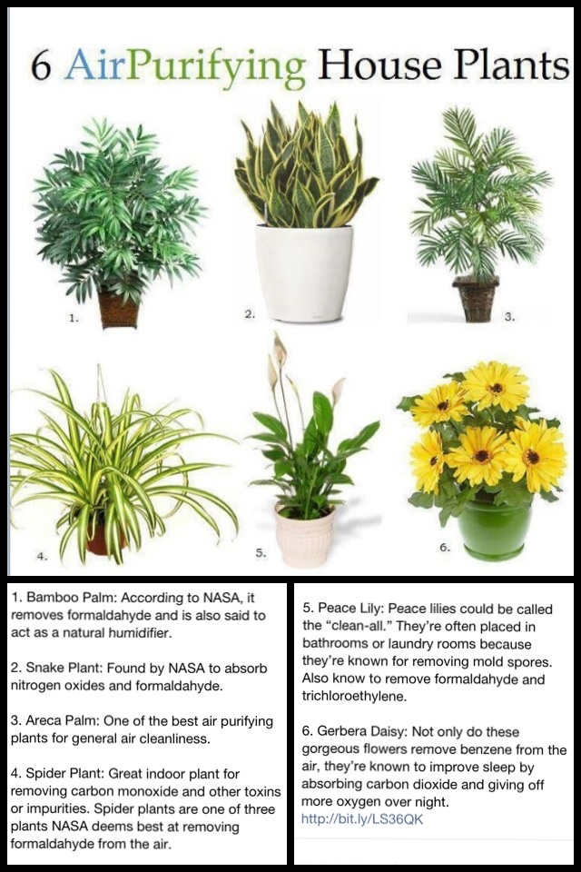 oxygen rich plants for the home for the home pinterest
