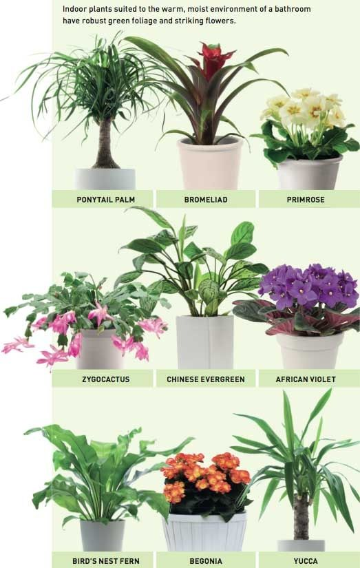 Plants For Bathrooms Inspiration Decorating Design
